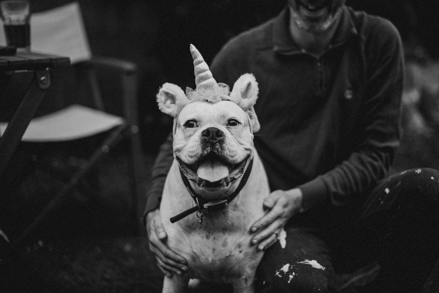 pies zdjecie z rozkiem na glowie